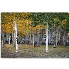 "<strong>iCanvasArt</strong> ""Dixie Forest, Utah"" Canvas Wall Art by J.D. McFarlan"