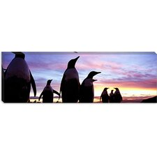 <strong>iCanvasArt</strong> Group of Gentoo Penguins, Falkland Islands Canvas Wall Art
