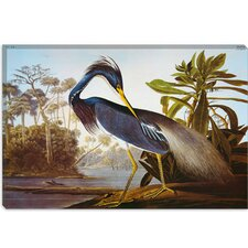 """Louisiana Heron from Birds of America"" Canvas Wall Art by John James Audubon"