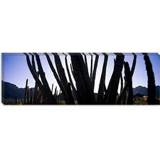 <strong>iCanvasArt</strong> Organ Pipe Cactus National Monument, Arizona Canvas Wall Art