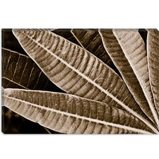 <strong>iCanvasArt</strong> Sepia Leaves Modern Canvas Wall Art