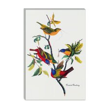 """Painted Bunting"" Canvas Wall Art by John James Audubon"