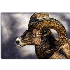 """Portrait of Desert Bighorn Sheep"" Canvas Wall Art by Cory Carlson"