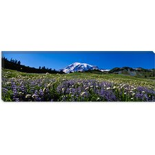 <strong>iCanvasArt</strong> Wildflowers on a Landscape, Mt Rainier National Park, Washington State Canvas Wall Art