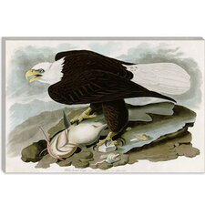 """White-Headed Eagle"" Canvas Wall Art by John James Audubon"