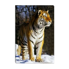 <strong>iCanvasArt</strong> Tiger Canvas Wall Art