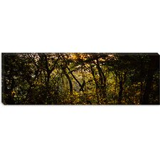 <strong>iCanvasArt</strong> Sunset over a Forest, Monteverde Cloud Forest, Costa Rica Canvas Wall Art