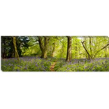 <strong>iCanvasArt</strong> Trees in a Forest, Thursford Wood, Norfolk, England  Canvas Wall Art