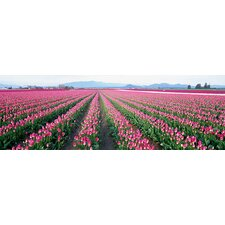 <strong>iCanvasArt</strong> Tulip Fields, Skagit County, Washington State Canvas Wall Art