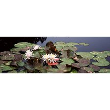 Water Lilies in a Pond, Sunken Garden, Olbrich Botanical Gardens, Madison, Wisconsin Canvas Wall Art