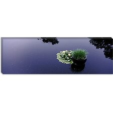 Water Lilies with a Potted Plant in a Pond, Olbrich Botanical Gardens, Madison, Wisconsin Canvas Wall Art