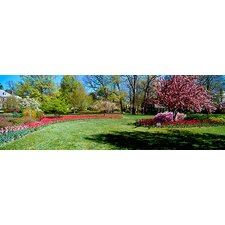 <strong>iCanvasArt</strong> Tulips and Cherry Trees in a Garden, Sherwood Gardens, Baltimore, Maryland Canvas Wall Art