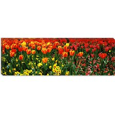 <strong>iCanvasArt</strong> Tulips in a Field, St. James's Park, City of Westminster, London, England Canvas Wall Art