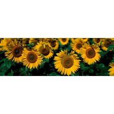 <strong>iCanvasArt</strong> Sunflowers ND Canvas Wall Art