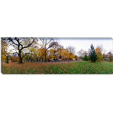 <strong>iCanvasArt</strong> Trees in a Park, Central Park, Manhattan, New York City, New York State Canvas Wall Art