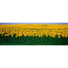 <strong>iCanvasArt</strong> Sunflower Field, Maryland Canvas Wall Art