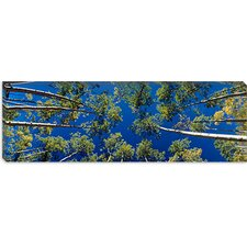 <strong>iCanvasArt</strong> White Aspen Trees CO Canvas Wall Art