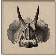 <strong>iCanvasArt</strong> Triceratops Skull Anatomy Canvas Wall Art