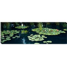 Water Lilies in a Pond, Denver Botanic Gardens, Denver, Colorado Canvas Wall Art
