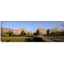 Trees in the Lawn of a University, University of Washington, Seattle, King County, Washington State Canvas Wall Art