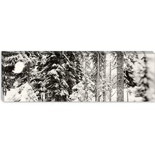 Snow Covered Evergreen Trees at Stevens Pass, Washington State Canvas Wall Art