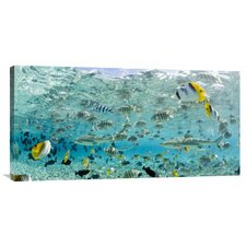 'Blacktip Sharks and Tropical Fish in Bora-Bora Lagoon' by Michele Westmorland Photographic Print on Canvas