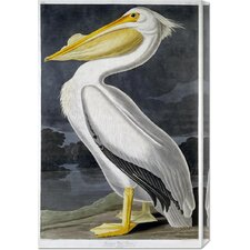 'American White Pelican' by John James Audubon Stretched Canvas Art