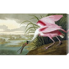 'Roseate Spoonbill' by John James Audubon Stretched Canvas Art