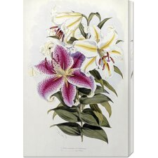 <strong>Bentley Global Arts</strong> 'A Monograph of The Genus Lilium' by Henry John Elwes Stretched Canvas Art