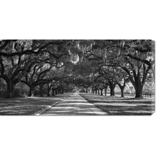 <strong>Bentley Global Arts</strong> 'Live Oaks Along Road' by William Manning Stretched Canvas Art