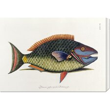 <strong>Bentley Global Arts</strong> 'The Parrot Fish' by Mark Catesby Stretched Canvas Art