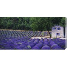 'Fields of Lavender by Rustic Farmhouse' by Owen Franken Photographic Print on Canvas