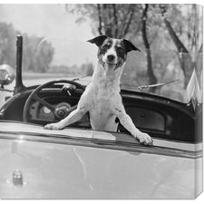 <strong>Bentley Global Arts</strong> 'Fox Terrier in Convertible, 1953' by Anonymous Stretched Canvas Art