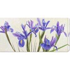 'Iris' by Elena Dolci Painting Print on Canvas