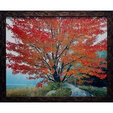 <strong>North American Art</strong> Wild Red Maple and Fog Wall Art