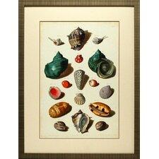 Muller Shells V by Gabriel Muller Framed Graphic Art