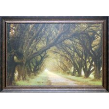 Evergreen Alley by William Guion Framed Photographic Print