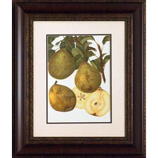 <strong>North American Art</strong> Pear Varieties II Wall Art