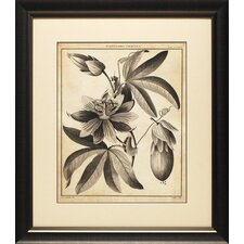 <strong>North American Art</strong> Passiflora III Wall Art