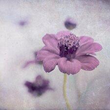 'Chocolate Cosmea' by Iris Lehnhardt Photographic Print on Canvas