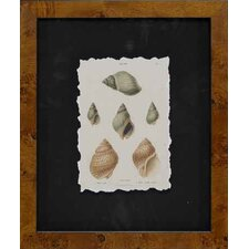 <strong>Epic Art</strong> Cawley's Shells I by Unknown Artist