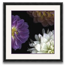 Flora Moderna Dahlia II Framed Graphic Art
