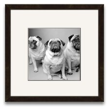 A Cherished Companion Three Pugs Wall Art