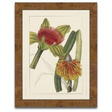 Rachel's Tropicals I Framed Graphic Art