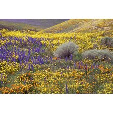 <strong>Maxwell Dickson</strong> California Wildflowers in Gorman