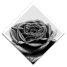 """Black Rose"" Graphic Art on Canvas"