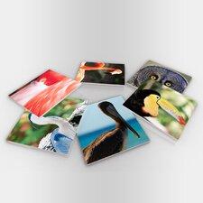 Wild Life Birds Coaster (Set of 6)
