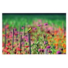 Live in the Sunshine by Robin Dickinson Decorative Doormat