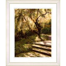 """Tree with Steps"" by Mia Singer Framed Fine Art Giclee Print"
