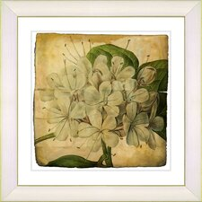 Vintage Botanical No. 47A by Zhee Singer Framed Giclee Print Fine Wall Art
